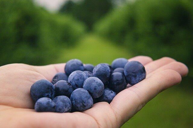 blueberries-6352547_640.jpg