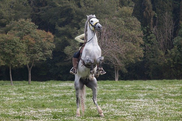 horse-554786_640.jpg